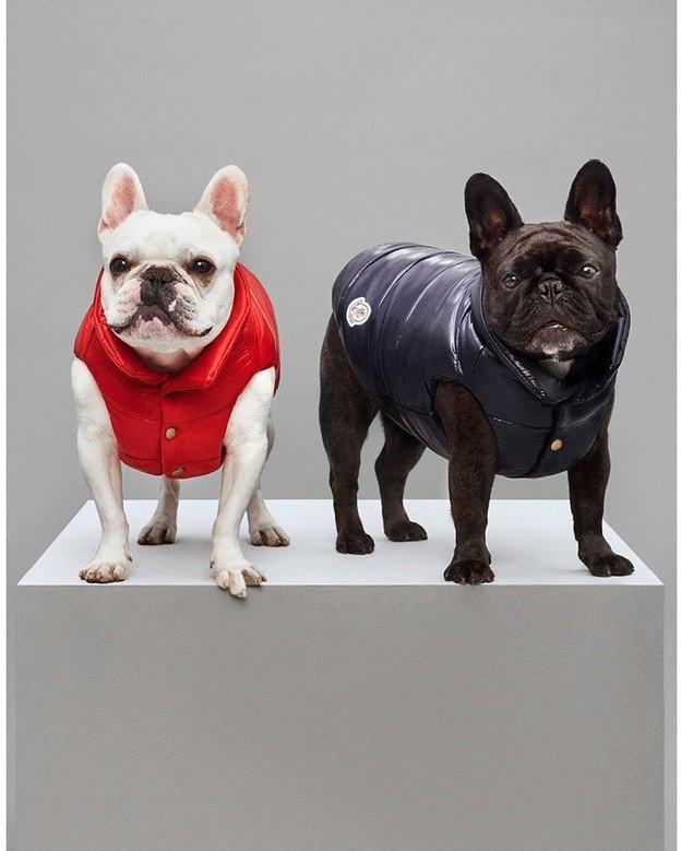 Ubranka dla psów Moncler będą hitem tej jesieni!