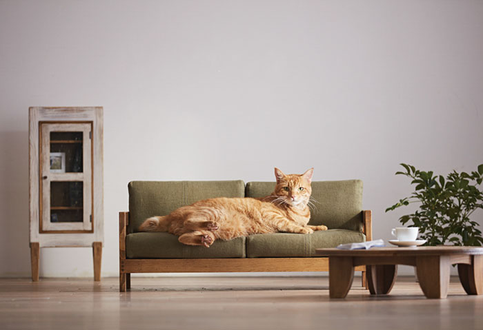 Oto miniaturowe meble, które twój kociak musi mieć!