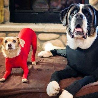 Powstały odstresowujące kombinezony dla psów!